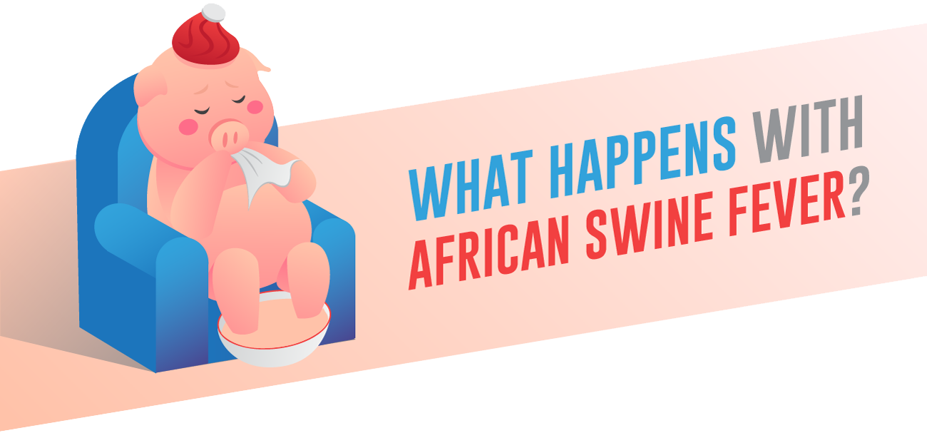 What happens with african swine fever.